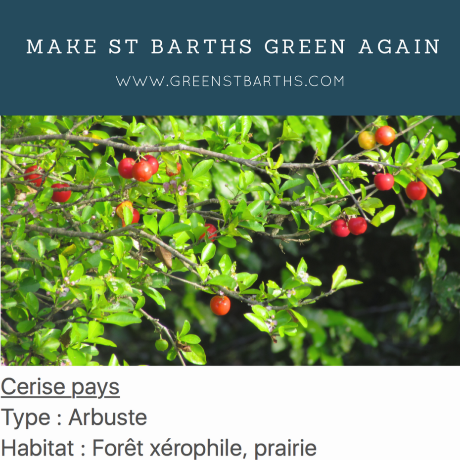 Make st barths green again plant IG